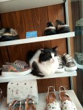 Cat inbetween shoes